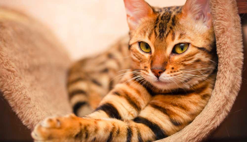 Trop de chats : un problème pour la biodiversité ?