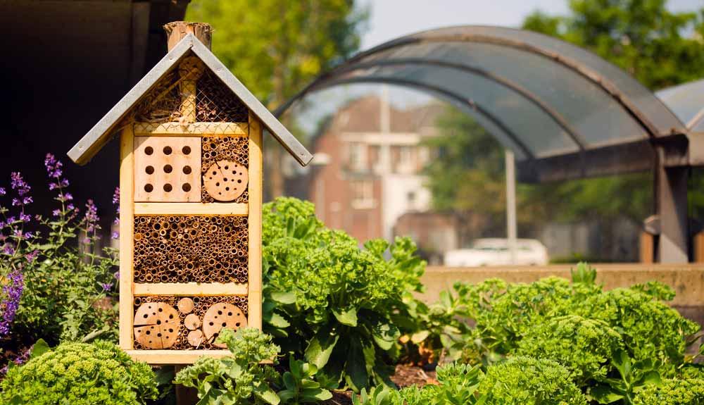 Installer des nichoirs à abeilles