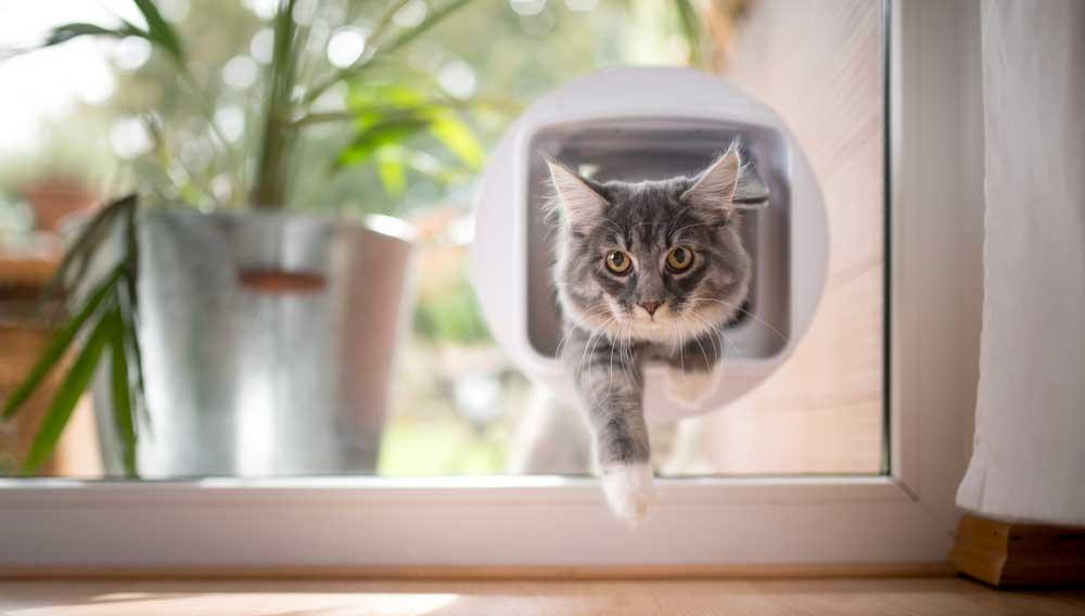 Acheter chatière
