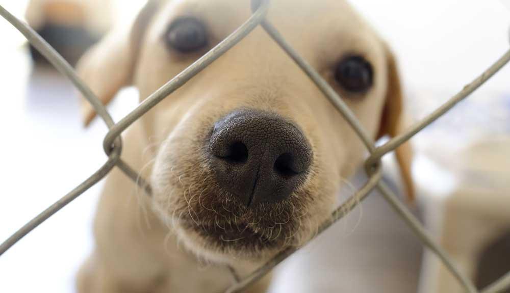 Pourquoi adopter plutôt qu'acheter en animalerie