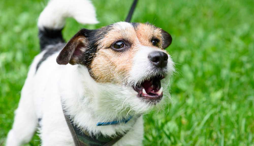 Comment faire pour que votre chien aboie moins ?