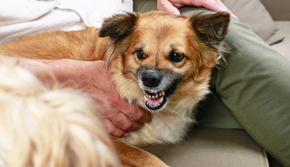 Pourquoi un chien devient agressif et que faire ?