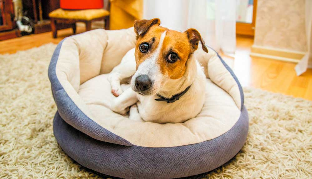 Comment calmer un chien anxieux ? 4 conseils