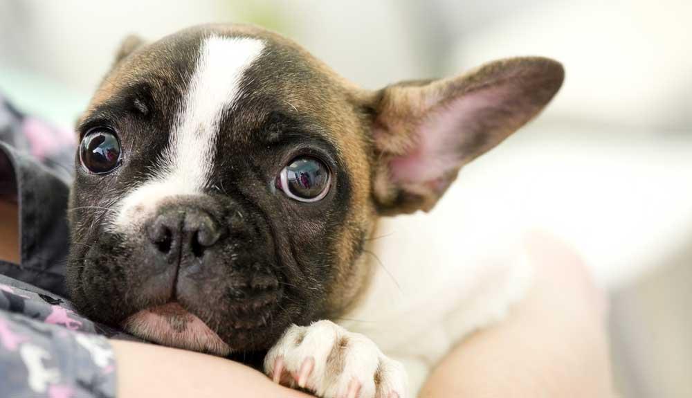 Anti stress chien : Quelles sont les solutions ?