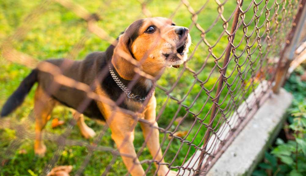 Comment faire arrêter un chien qui aboie trop ?