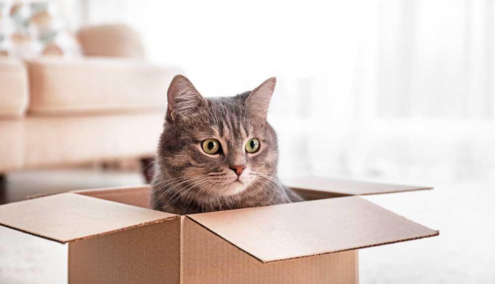 Mon chat n'est pas calin : a t-il un problème ?