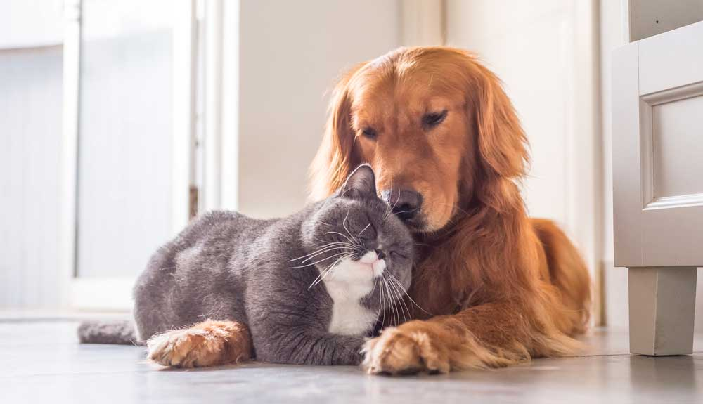 Comment faire cohabiter un chien avec un chat (ou autre animal)