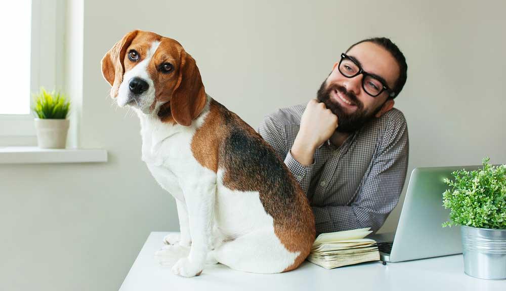 Mon chien me domine : pourquoi ? Comment y remédier ?