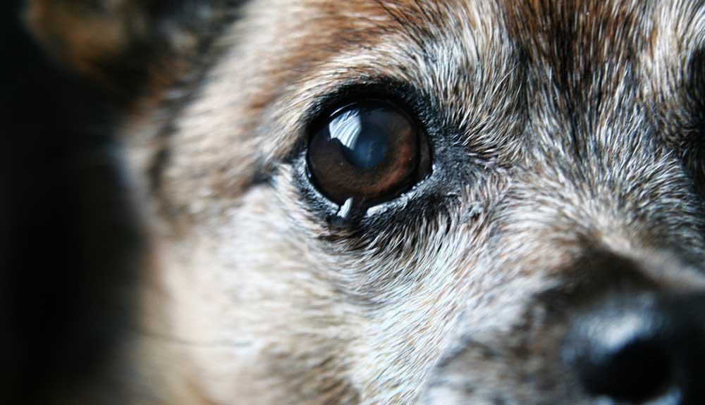 Mon chien pleure : que faire
