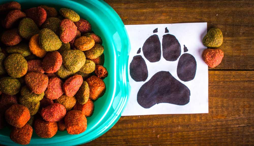 Croquettes bio pour son chien – notre avis