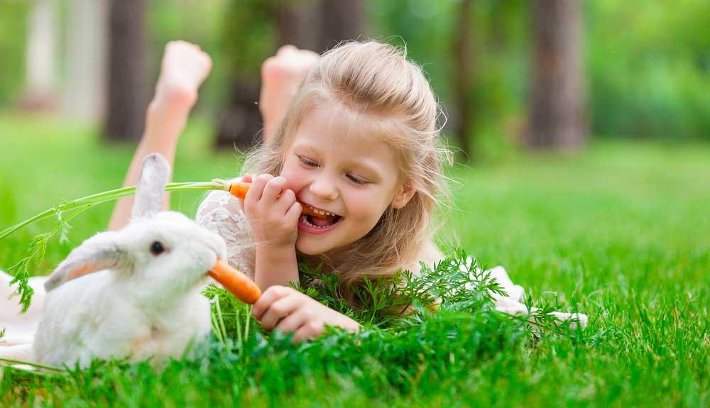 Avoir un lapin : comment bien s'en occuper