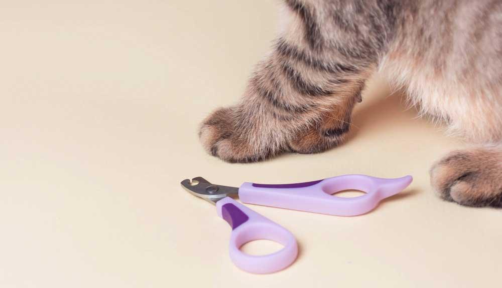 Quand et comment couper les griffes d'un chat