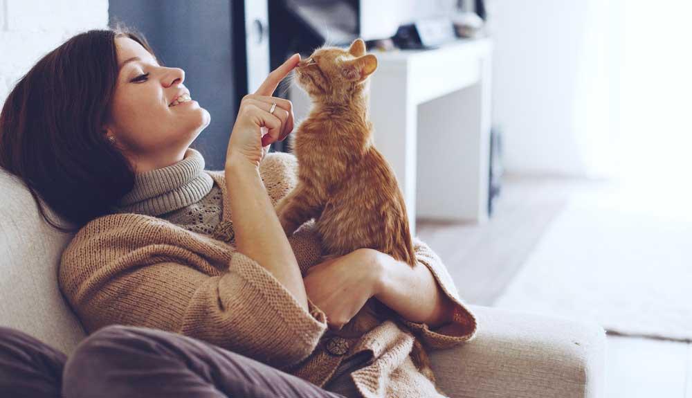 Jouer avec son chat : quelques idées
