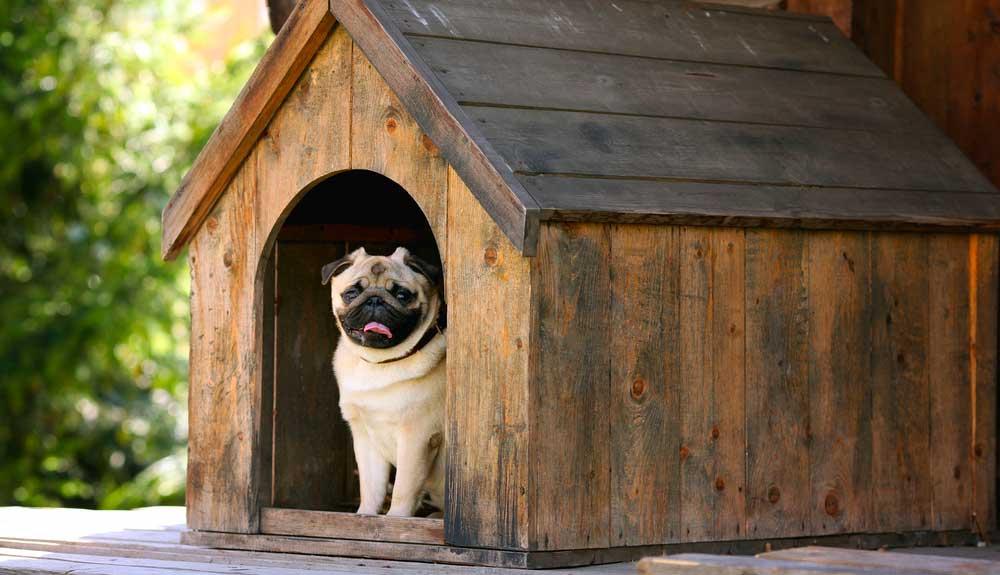 Quelle niche choisir pour mon chien ?