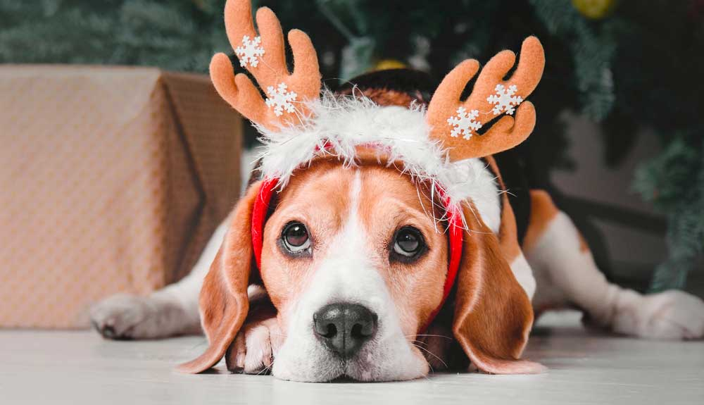 Cadeau de noel pour chien : Que lui offrir ?