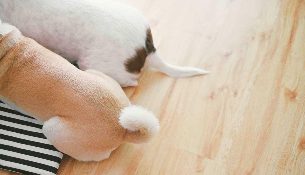A quoi sert la queue du chien ?