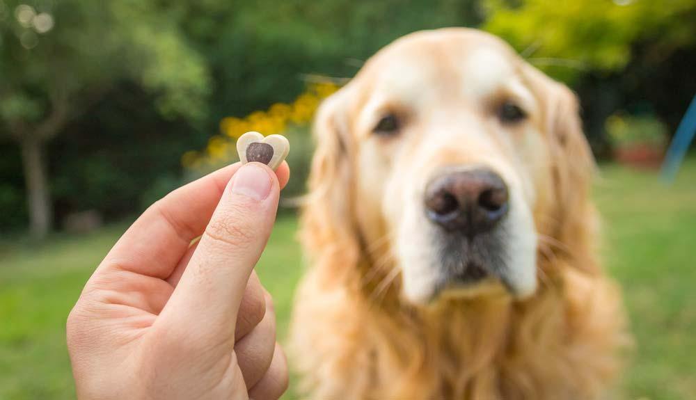 Bien récompenser son chien, pourquoi ? Comment ?